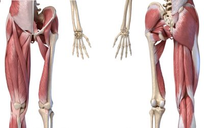 Assisted Bridge Exercise Along With Hip Abductor And Adductor Muscle Strengthening (Part 2)